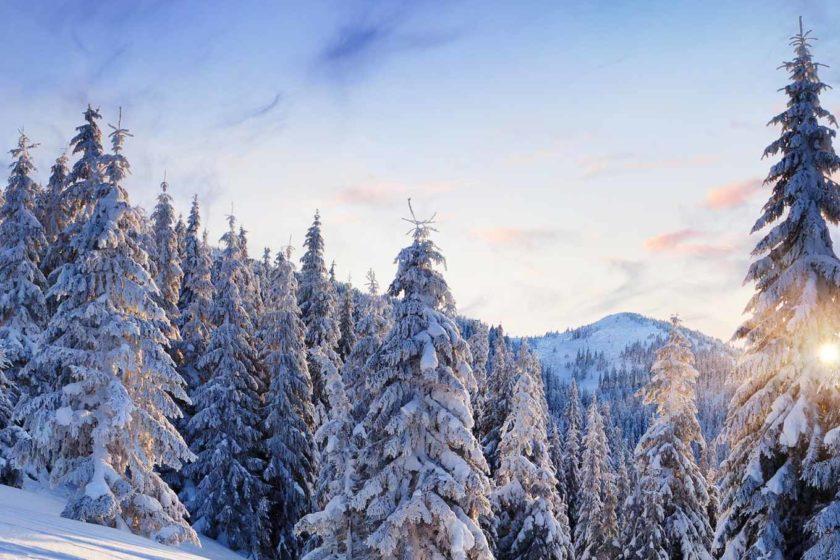 Зимний тур в Карпаты на Буковель