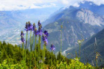 летний трэк вокруг Монблана в Альпах