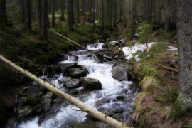 На Говерлу тур - река Прут